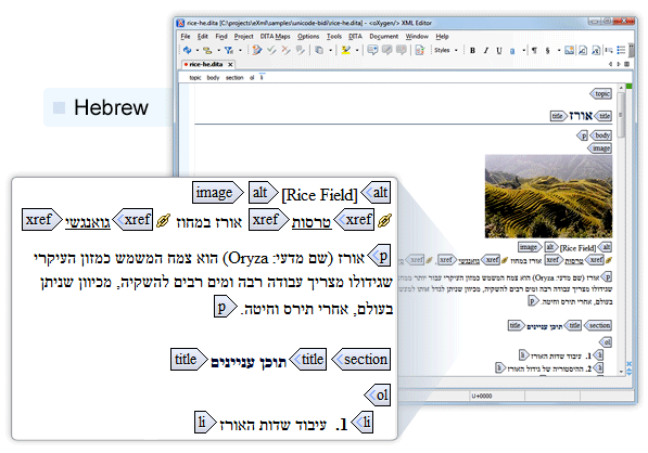 Hebrew Support in oXygen XML Author